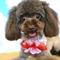 ハピネスフィールドで生まれた子犬