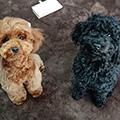 ハピネスフィールドで生まれた子犬たち